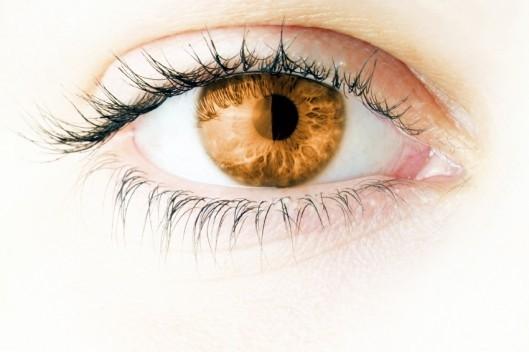 Eyeling Light Brown