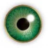 Air Optix Colors Gemstone Green